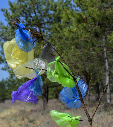 many multicolored plastic bags hanging on a pine branch フォト