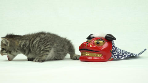 Lion Dance Medicine and kittens Footage