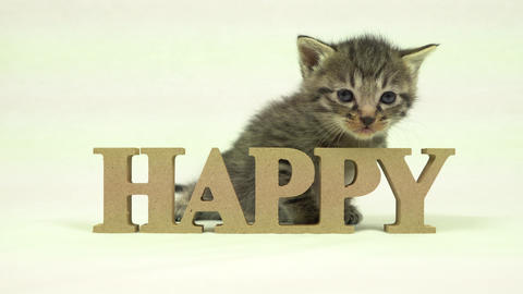 Kitten and Happy Footage