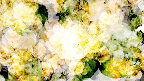 Flower_BG-1 フォト
