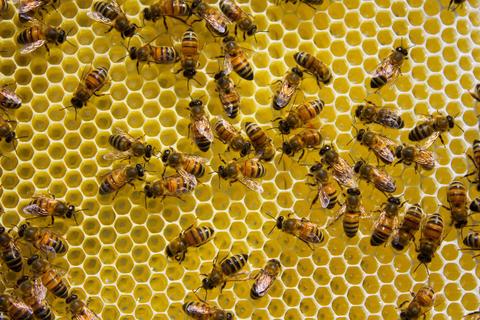 Bees swarming on a honeycom フォト