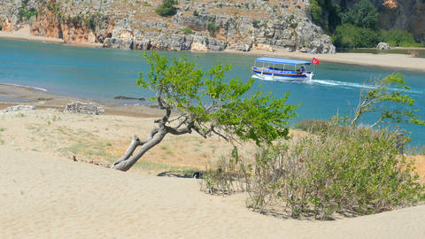 lonely single tree, boat trip, iztuzu turtle beach, dalyan, turkey Footage