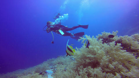 Underwater videographer, filming the bannerfish Live Action