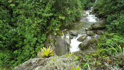rain forest river Footage