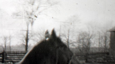 1938: Man rope training wild horse run circles country farm Footage