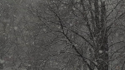 Snowflakes falling during a snowfall on the background of trees in winter Footage