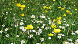 Wild flowers in meadow Footage