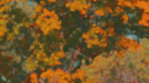 Defocused trees swaying in the wind. 4K fall themed background plate Footage
