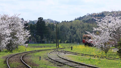 Local railway running on a curve between cherry blossoms 영상물