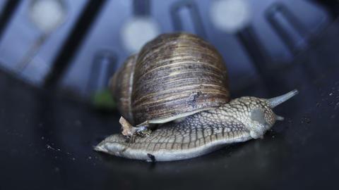 Macro Side View of Garden Snail GIF