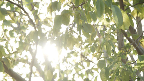 sunlight streaming through leaves Archivo