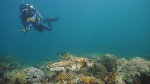 Scuba Diver underwater. Philippines, Mindoro フォト