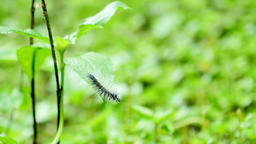 Caterpillar on green leaf Live Action