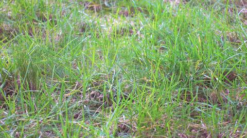 First green grass, lawn in garden Live Action