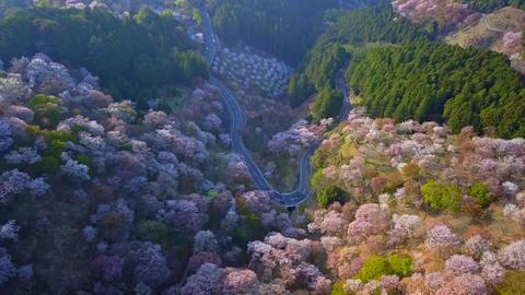 Aerial backward flight over flowered forest in Japan Footage