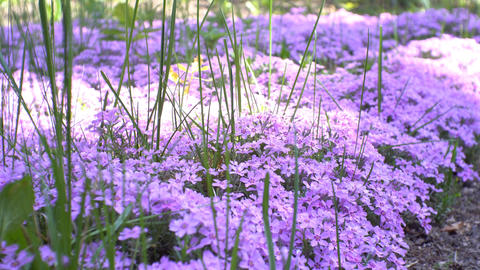 Small flower garden with sun rays Footage