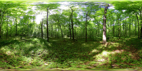 360 vr forest timelapse panoramic 4k Footage