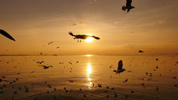 Slow Motion Seagulls Flying Above Sea At Sunset 영상물