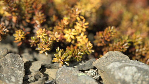 Shrubs in spring Live Action