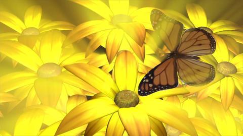 Flowers butterfly nature garden Footage