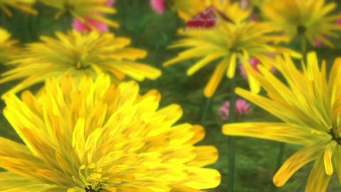 Flowers nature butterfly natural Footage