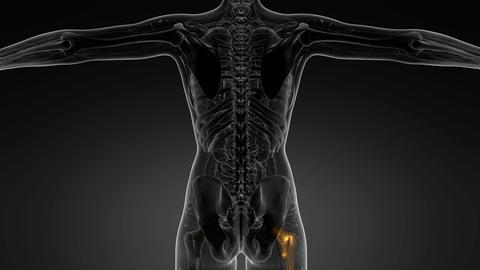 hip bones anatomy medical scan Footage