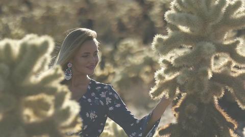 walk between cacti in the desert Live Action