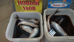 Zoom in view of salted pacific herring fish with brine for sale in fish market Footage