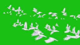 Footage HD DOVES 2016 free download animation on a green screen background from 영상물