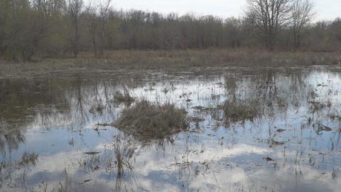 Panorama of marshland Live Action