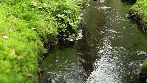 creek in the green forest Footage