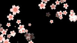 和風の花がひろがる CG動画素材