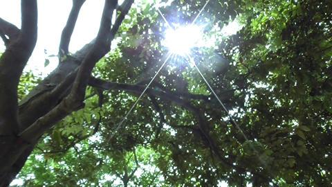 木漏れ日 ビデオ