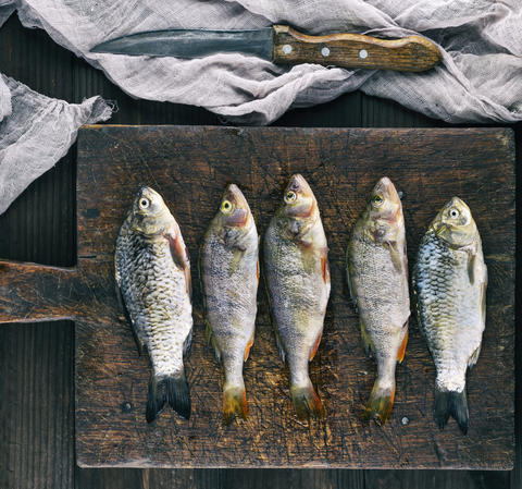 river fish crucian and perch Photo