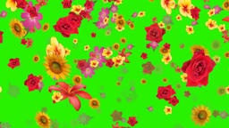 Flowers falling animation green screen effect Footage