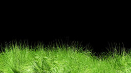 Animated Grass Motion Black Screen Background Footage