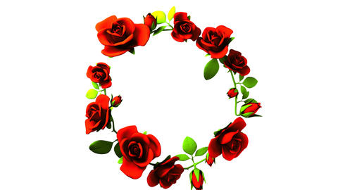 Red roses frame on white text space CG動画