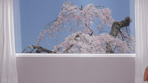 Female hand in male hand on background window with view on blossoming sakura Footage