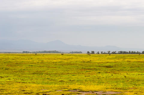 View of a pond and a hill in the savannah of Amboseli Park フォト