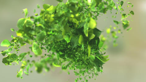Exploding green tea leafs in 4K Stock Video Footage