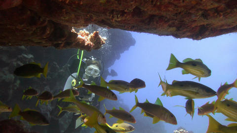 Underwater videographer, filming fish snappers Footage