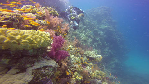 Underwater videographer, filming the colorful coral reef Footage