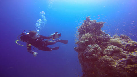 Underwater videographer, filming a coral reef Live Action