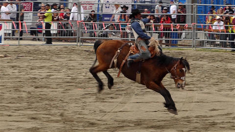 Rodeo - 14 Live Action