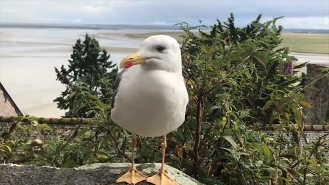 bird ビデオ