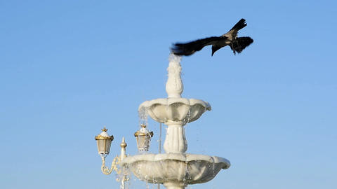 Stop Motion. Wicked crow drinking water and having bath in a fountain in a city Footage
