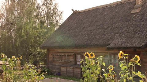 The old rural wooden house and sunflowers Footage