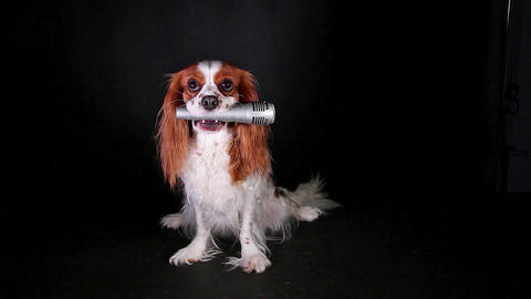 Dog holding microphone mike event pet gathering party Live Action