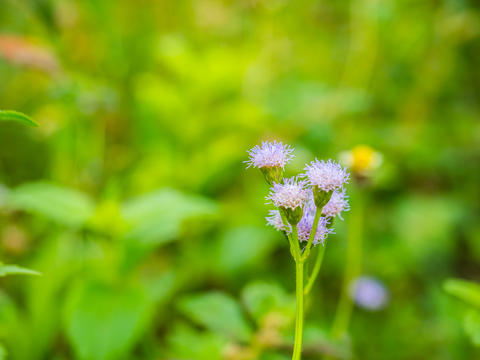 beautiful purple grass flowers with blurry background フォト