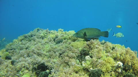 MArine life - Scuba diving in a reef Live Action
